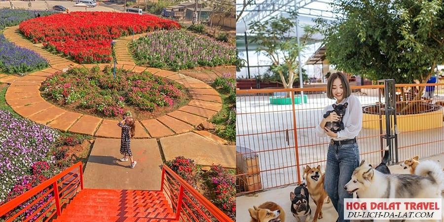 Trang trại cún Đà Lạt