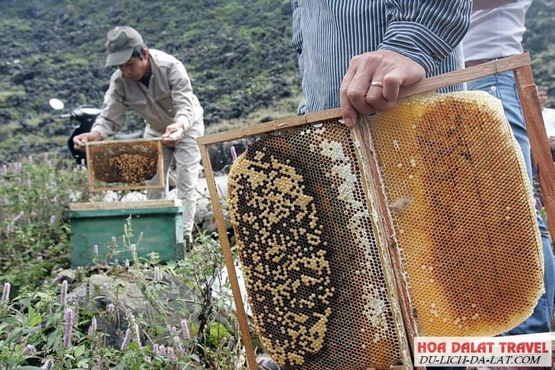 Trang trại nuôi ong Đà Lạt