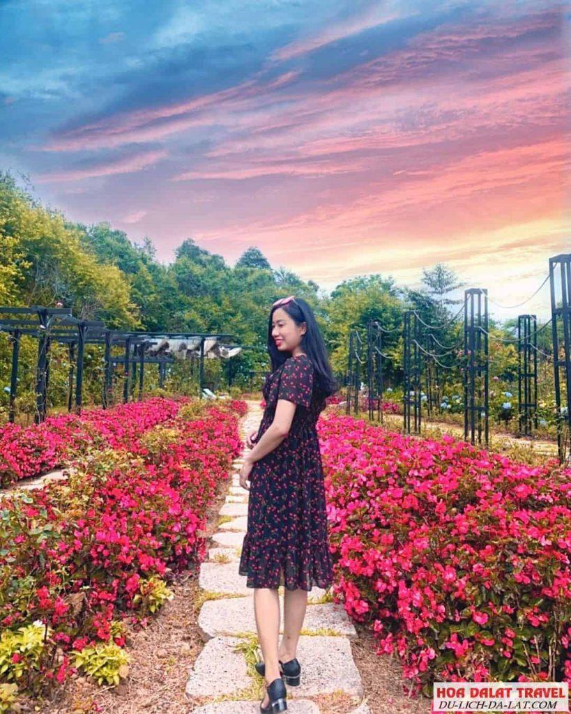 F cánh đồng hoa Đà Lạt có thật sự đẹp