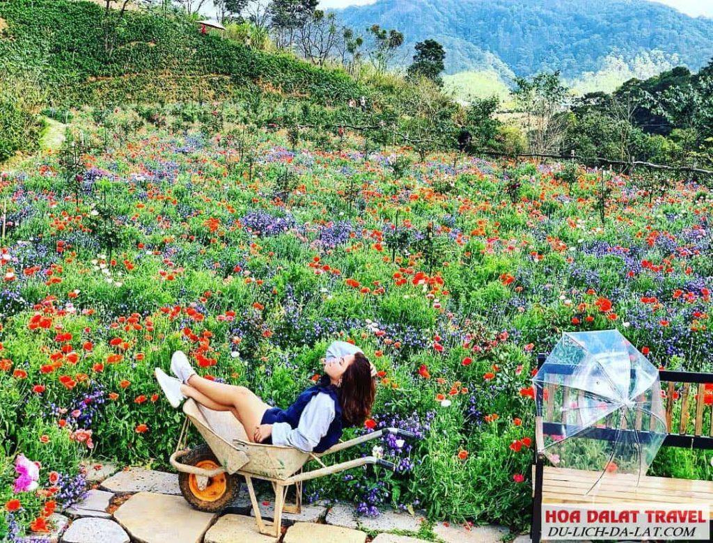 Hình ảnh F cánh đồng hoa ở Đà lạt