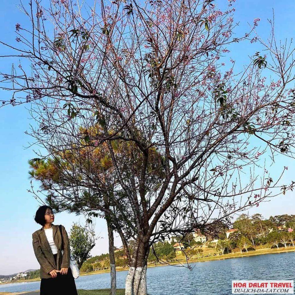 Phong cảnh hồ Xuân Hương