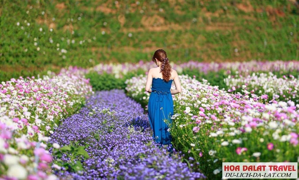 Tham quan F cánh đồng hoa Cafe