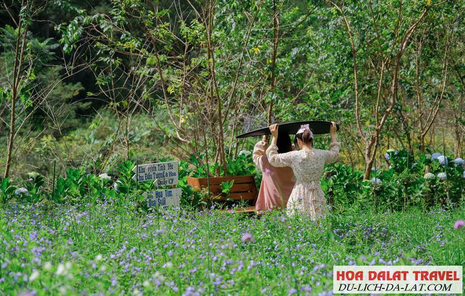 Tham quan F cánh đồng hoa