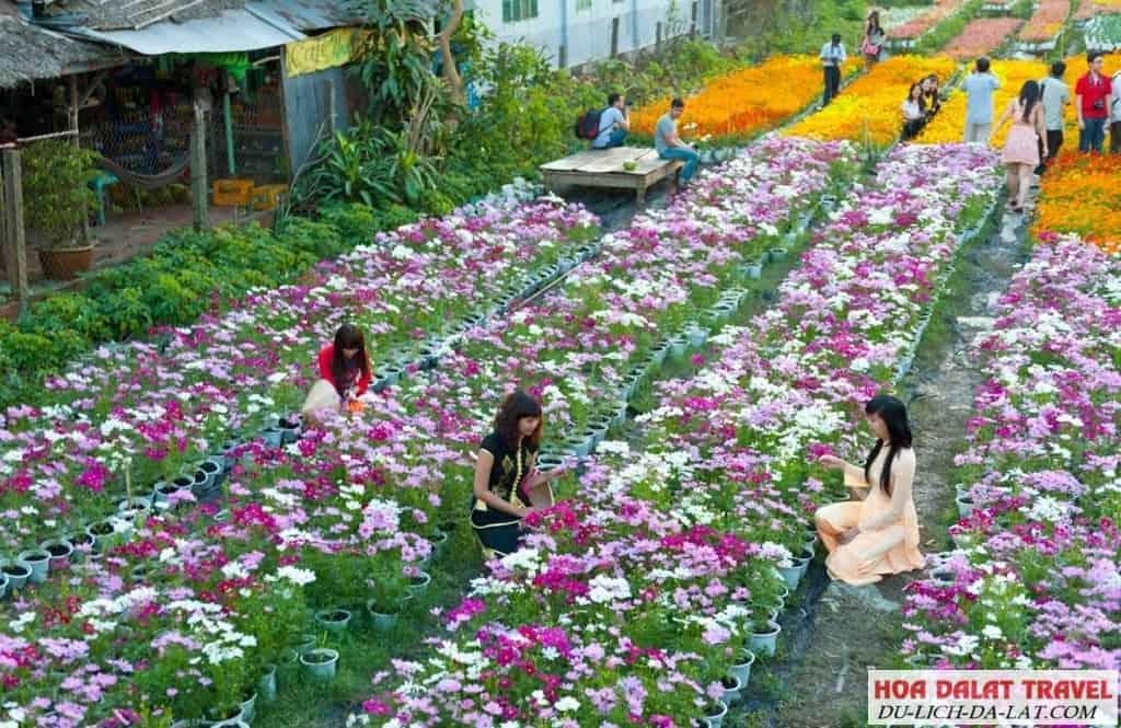 Du lịch Làng Hoa Thái Phiên