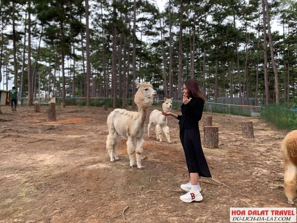 Hình ảnh sở thú zoodoo - check in