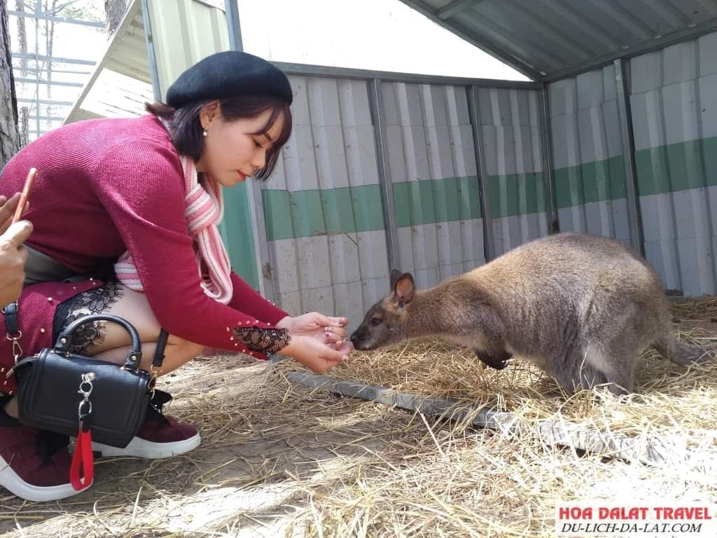 Hình ảnh sở thú zoodoo - du khách