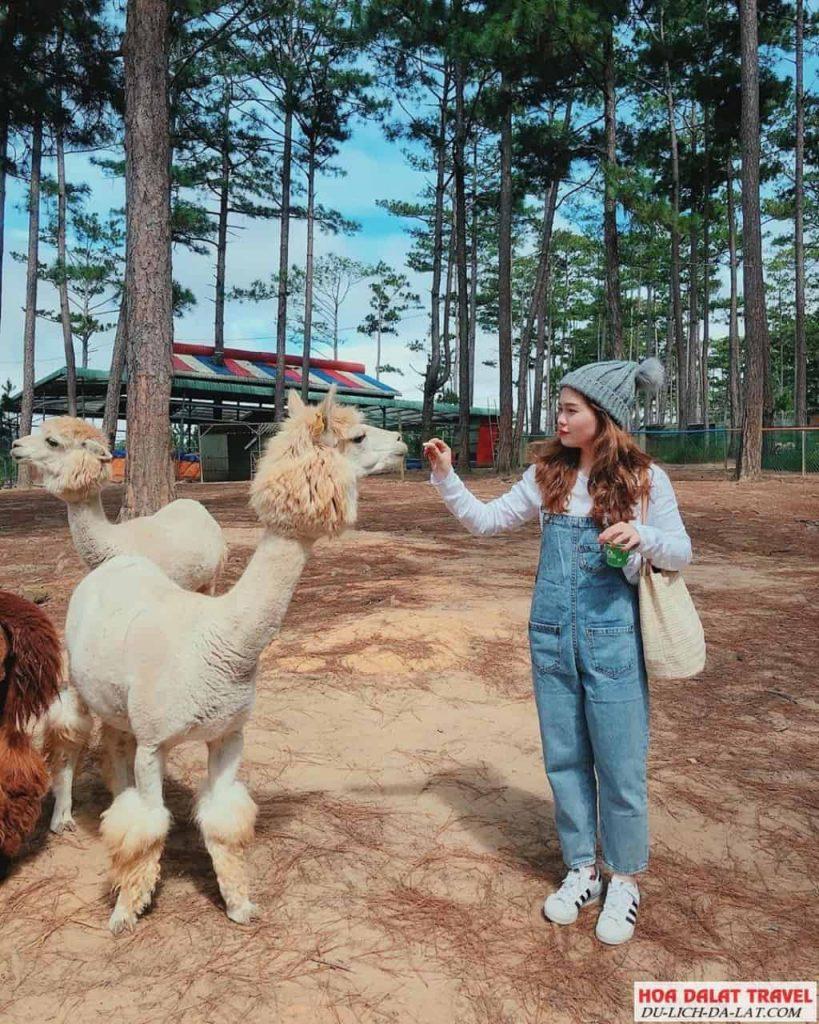 Những địa điểm được tham quan trong tour zoodoo Đà Lạt