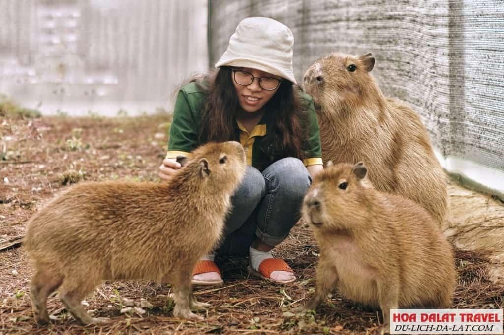 Sở thú thân thiện Zoodoo ở Đà Lạt