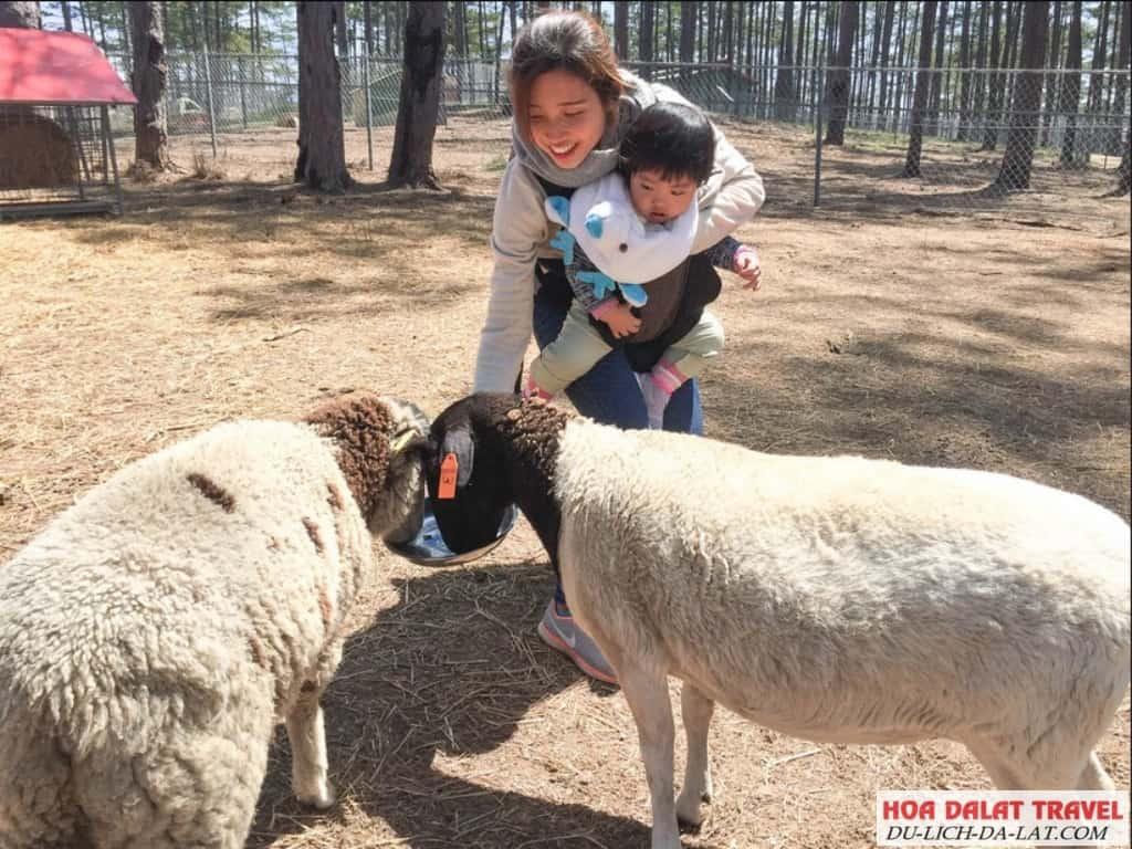 Zoodoo Đà Lạt địa điểm du lịch lý tưởng cho các bé